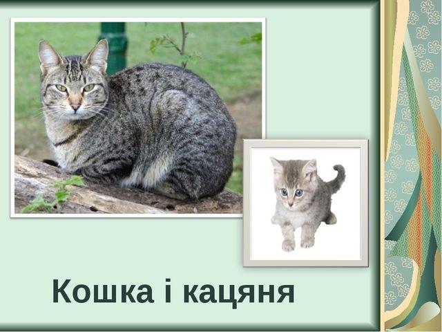 Кошка і кацяня
