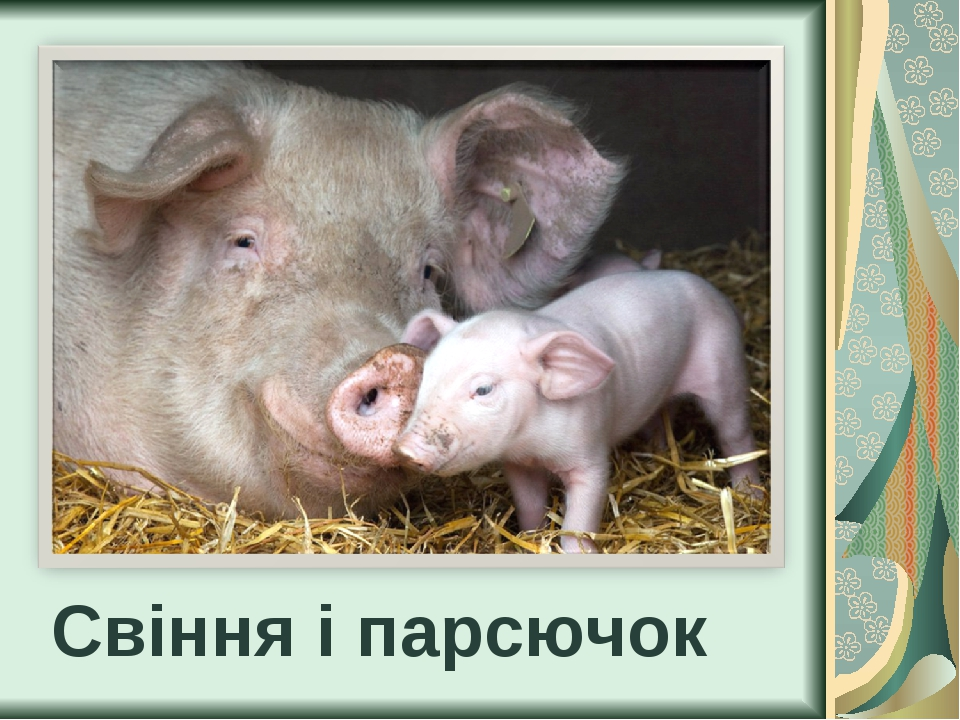 Свіння і парсючок
