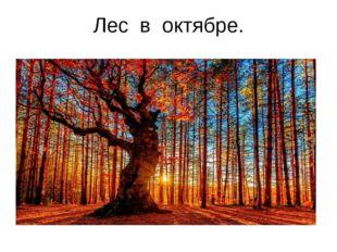 Лес в октябре.
