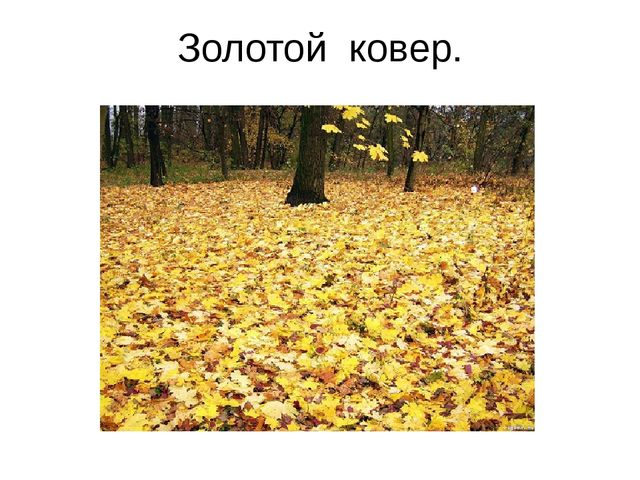 Золотой ковер.