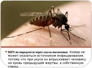 ВИЧ не передается через укусы насекомых. Комар не может оказаться источником