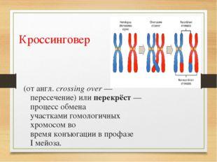 Кроссинговер (отангл.crossing over— пересечение) или перекрёст— процесс о