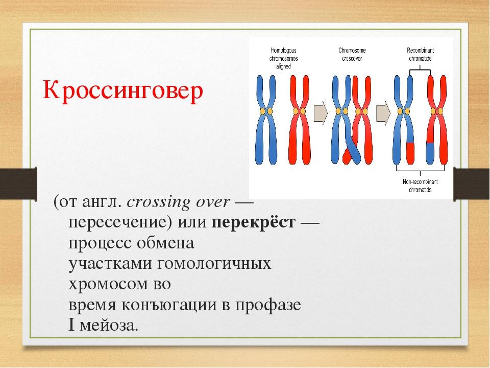 Кроссинговер (отангл.crossing over— пересечение) или перекрёст— процесс о...