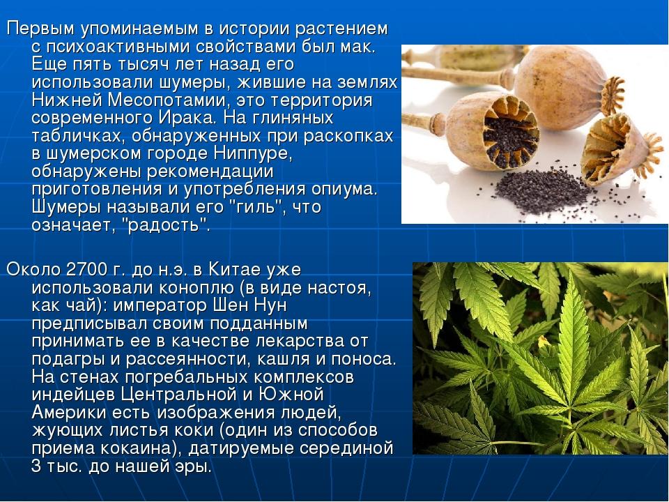 Первым упоминаемым в истории растением с психоактивными свойствами был мак. Е...