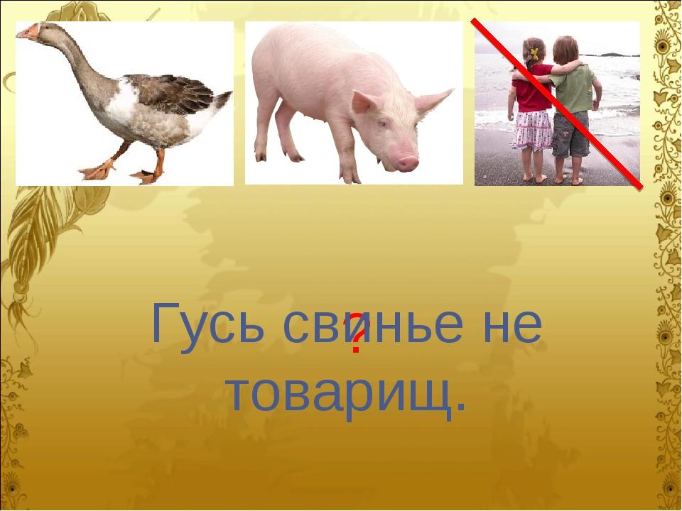 ? Гусь свинье не товарищ.