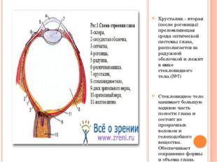 Хрусталик - вторая (после роговицы) преломляющая среда оптической системы гл
