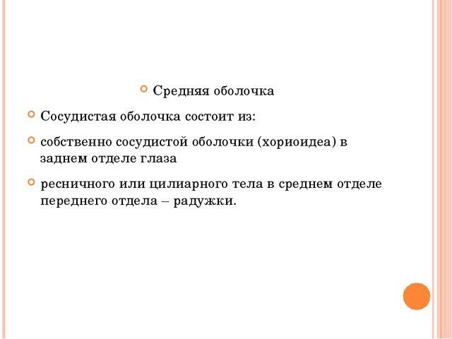 Средняя оболочка Сосудистая оболочка состоит из: собственно сосудистой оболоч...