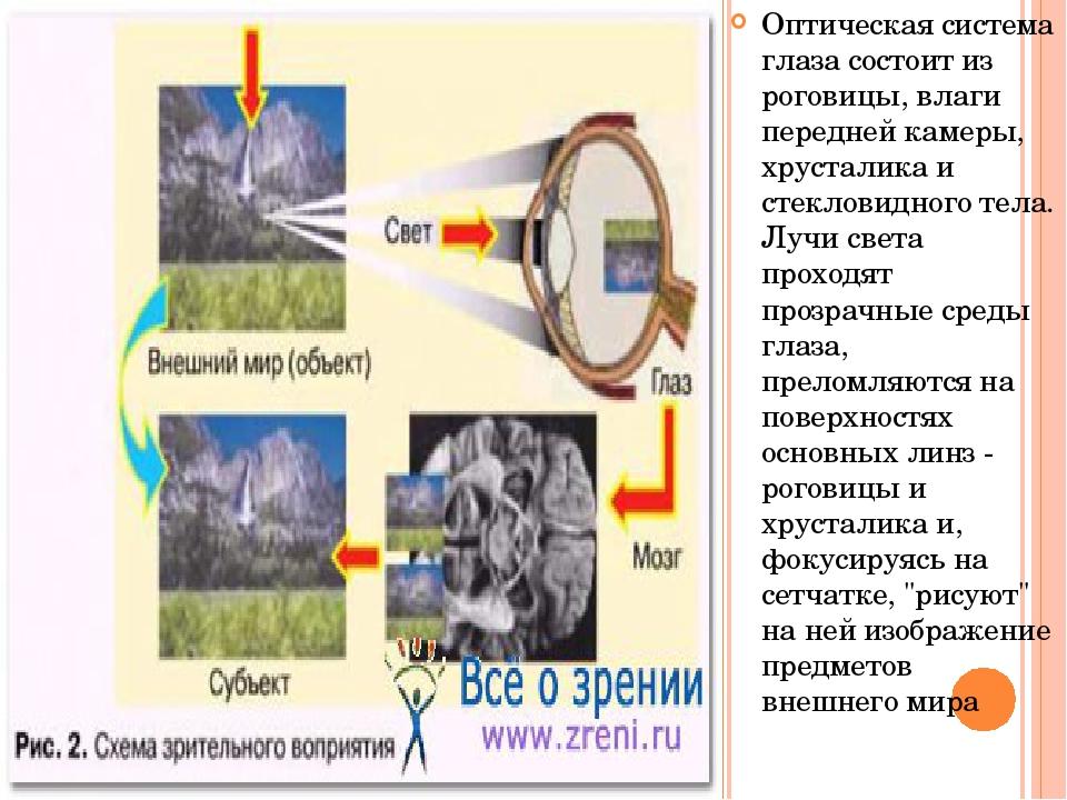 Оптическая система глаза состоит из роговицы, влаги передней камеры, хрустали...