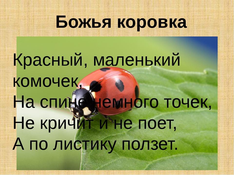 Божья коровка Красный, маленький комочек, На спине немного точек, Не кричит и...