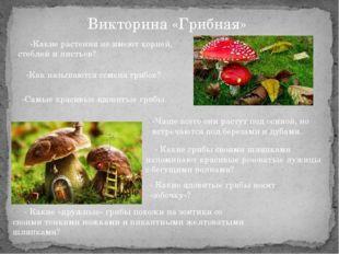 Викторина «Грибная» -Какие растения не имеют корней, стеблей и листьев? -Как
