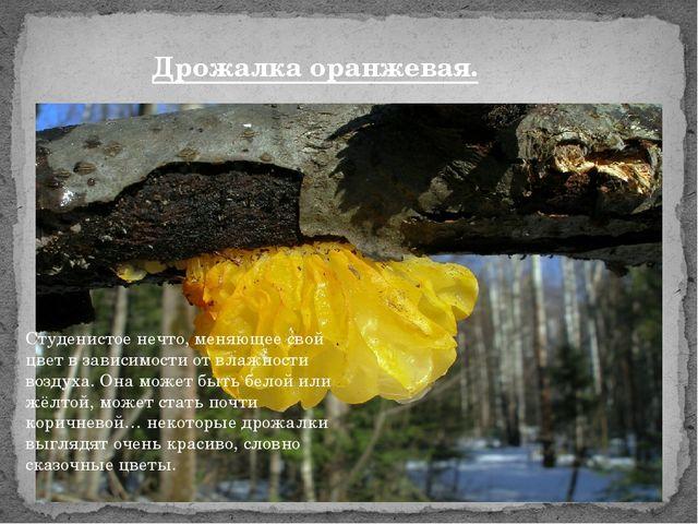 Дрожалка оранжевая. Студенистое нечто, меняющее свой цвет в зависимости от вл...