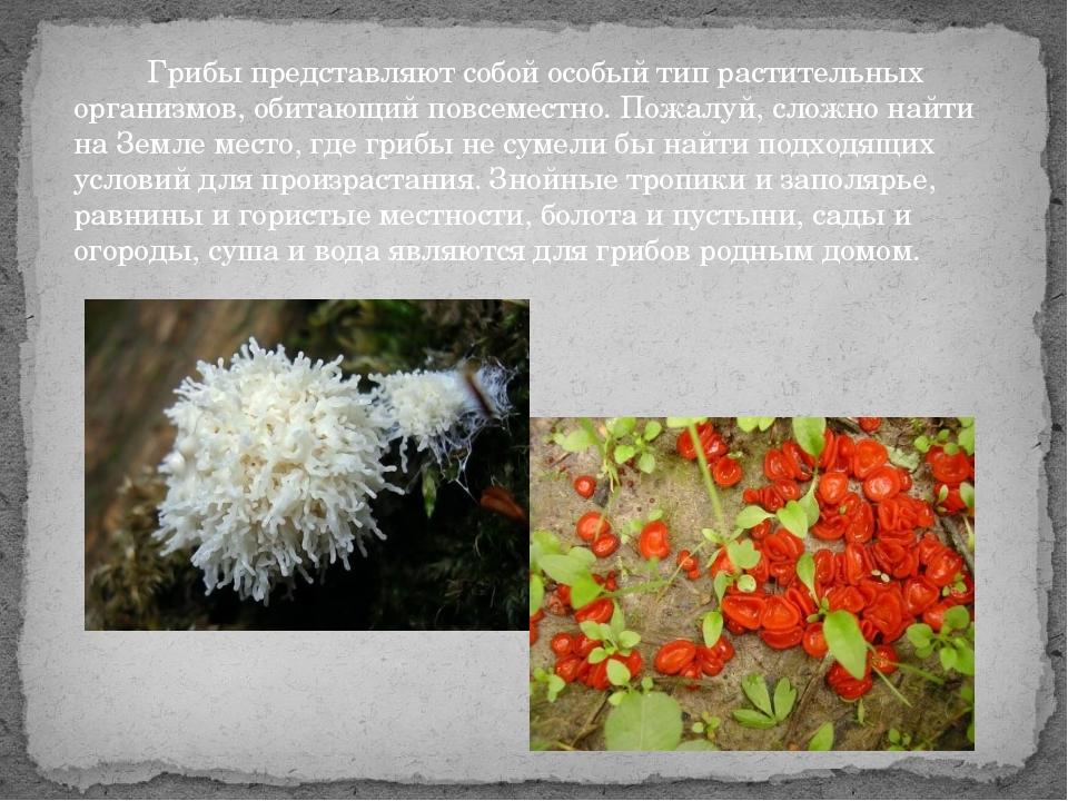 Грибы представляют собой особый тип растительных организмов, обитающий повсе...