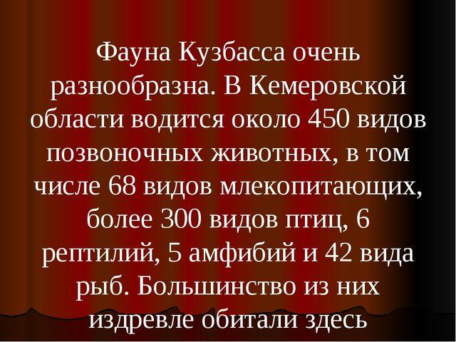 Фауна Кузбасса очень разнообразна. В Кемеровской области водится около 450 ви...