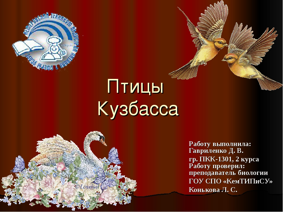 Птицы Кузбасса Работу выполнила: Гавриленко Д. В. гр. ПКК-1301, 2 курса Работ...