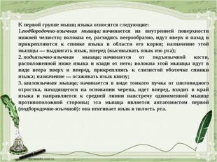К первой группе мышц языка относятся следующие: 1.подбородочно-язычная мышца;