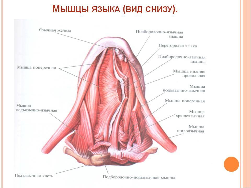 porno-transvestitov-rossiyskih