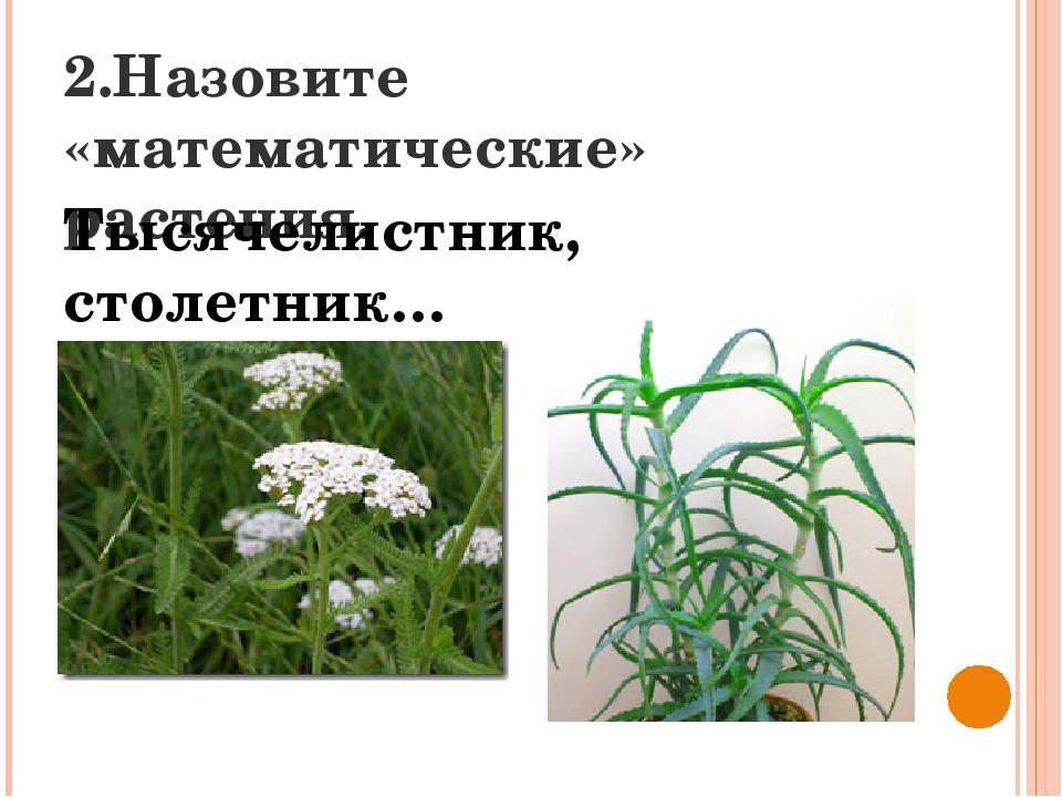 2.Назовите «математические» растения. Тысячелистник, столетник…