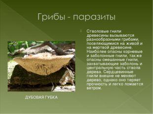 Стволовые гнили древесины вызываются разнообразными грибами, поселяющимися на