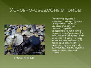 Помимо съедобных выделяют также условно-съедобные грибы. К условно-съедобным
