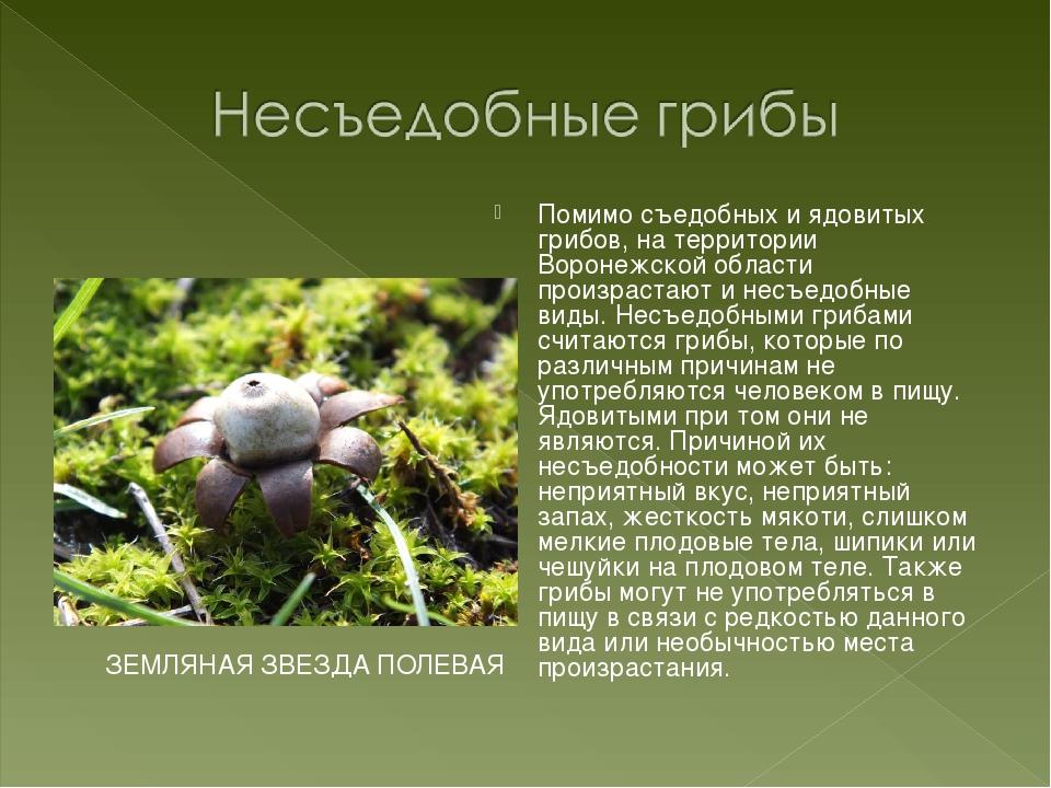 Помимо съедобных и ядовитых грибов, на территории Воронежской области произра...