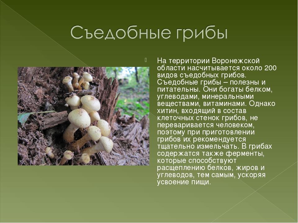 На территории Воронежской области насчитывается около 200 видов съедобных гри...