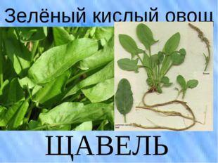 Зелёный кислый овощ ЩАВЕЛЬ