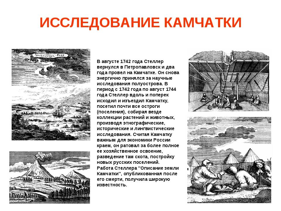 ИССЛЕДОВАНИЕ КАМЧАТКИ В августе 1742 года Стеллер вернулся в Петропавловск и...