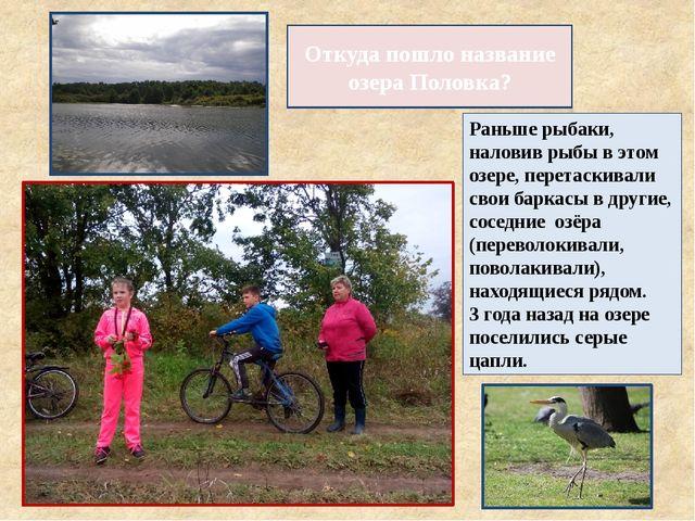 Откуда пошло название озера Половка? Раньше рыбаки, наловив рыбы в этом озере...