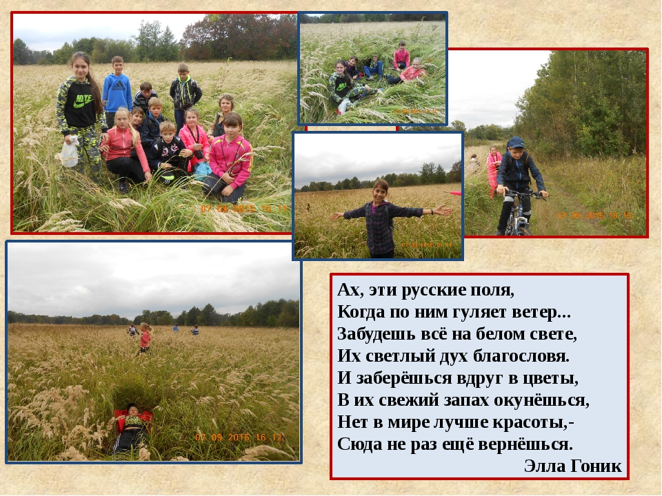Ах, эти русские поля, Когда по ним гуляет ветер... Забудешь всё на белом свет...