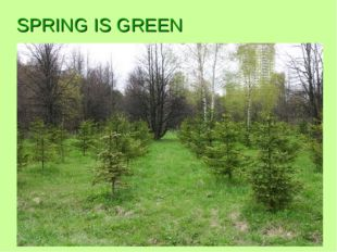SPRING IS GREEN