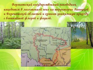 Воронежский государственный заповедник находится в лесостепной зоне на терри