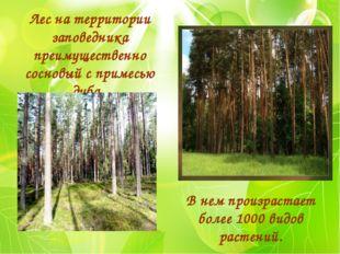 В нем произрастает более 1000 видов растений. Лес на территории заповедника п