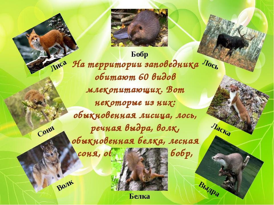 На территории заповедника обитают 60 видов млекопитающих. Вот некоторые из ни...