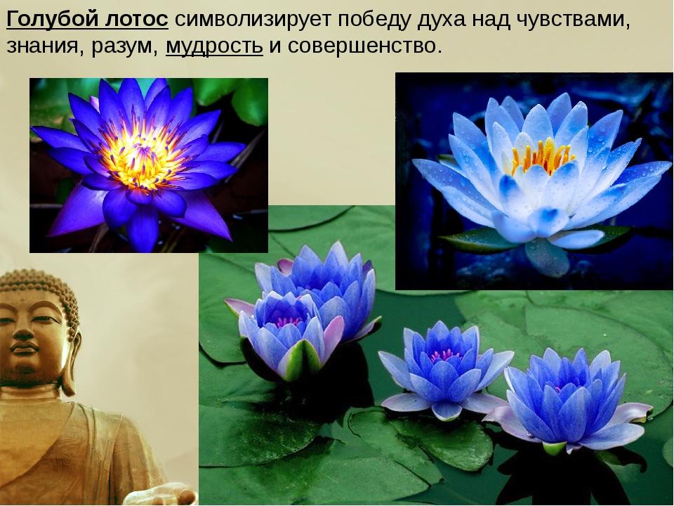 Голубой лотос символизирует победу духа над чувствами, знания, разум,мудрост...