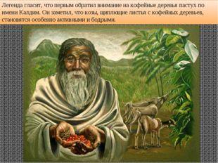 Легенда гласит, что первым обратил внимание на кофейные деревья пастух по име