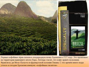 Первые кофейные зёрна попали в плодородную почву Бразилии в 1727 году. Это пр