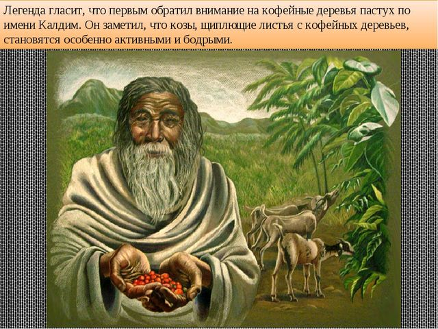 Легенда гласит, что первым обратил внимание на кофейные деревья пастух по име...