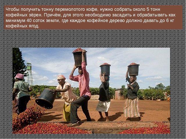 Чтобы получить тонну перемолотого кофе, нужно собрать около 5 тонн кофейных з...