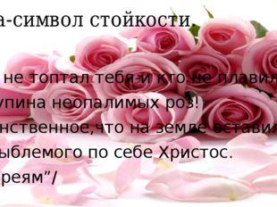 Роза-символ стойкости. Кто не топтал тебя-и кто не плавил, О купина неопалимы
