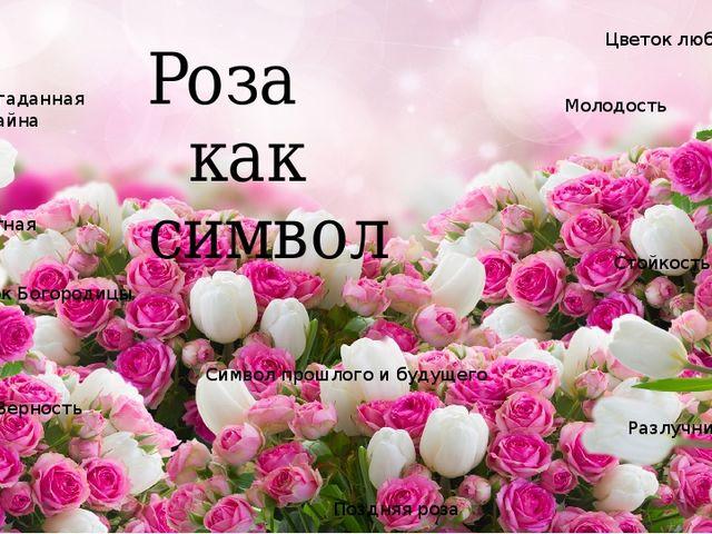 Роза как символ Неразгаданная тайна Цветок любви Разлучница Верность Цветок...