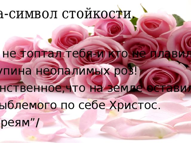 Роза-символ стойкости. Кто не топтал тебя-и кто не плавил, О купина неопалимы...