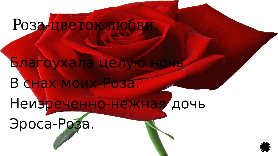 Роза-цветок любви. Благоухала целую ночь В снах моих-Роза. Неизреченно-нежная...