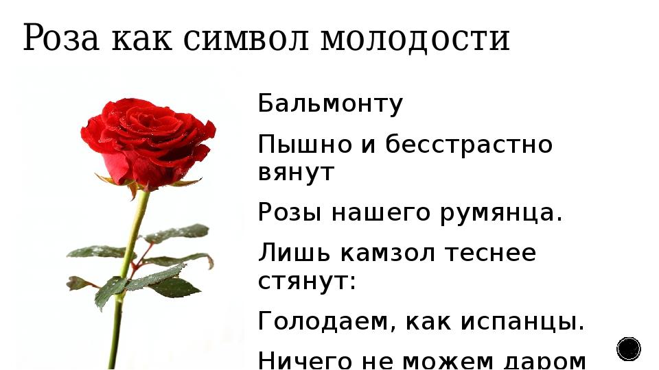 Роза как символ молодости Бальмонту Пышно и бесстрастно вянут Розы нашего рум...