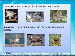 Грызуны: белка, белка-летяга, бурундук, заяц-беляк. Копытные: лось, дикий сев