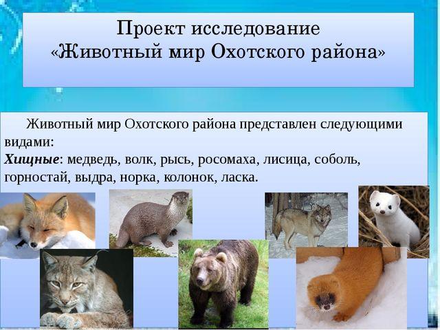 Проект исследование «Животный мир Охотского района» Животный мир Охотского р...