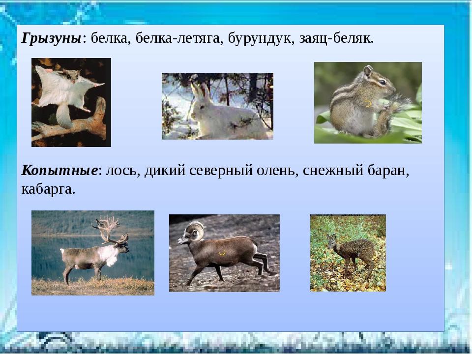 Грызуны: белка, белка-летяга, бурундук, заяц-беляк. Копытные: лось, дикий сев...