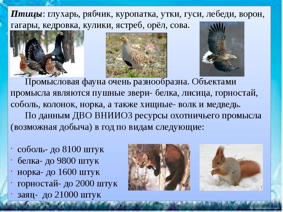 Птицы: глухарь, рябчик, куропатка, утки, гуси, лебеди, ворон, гагары, кедровк...