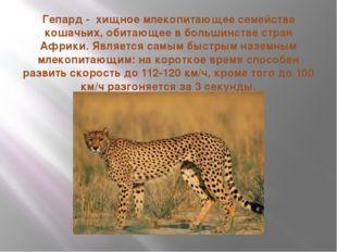 Гепард - хищное млекопитающее семейства кошачьих, обитающее в большинстве стр