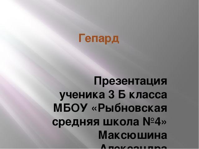 Гепард Презентация ученика 3 Б класса МБОУ «Рыбновская средняя школа №4» Макс...