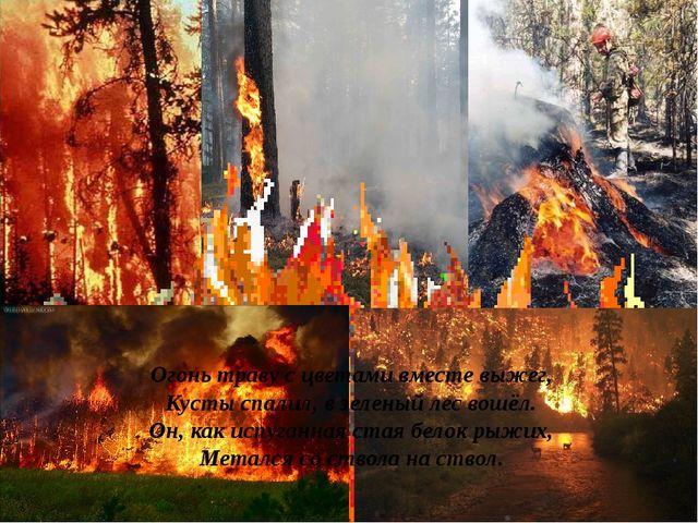 Огонь траву с цветами вместе выжег, Кусты спалил, в зеленый лес вошёл. Он, ка...